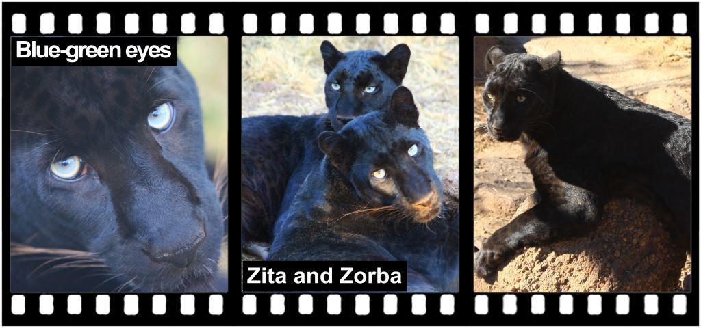 Zorba & Zita